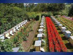 Apicultura en París - Apicoltura in Paris - Apiculture à Paris - Beekeeping in Paris - Paris'te Arıcılık Bee Syrup, Como Plantar Pitaya, Stingless Bees, Bee Hive Plans, Bee Swarm, Raising Bees, Buzzy Bee, Bee House, Garden Bugs