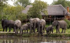 Value for Money Properties:Simbambili Game Lodge (South Africa)  Simbambili is a great no frills property that is independently owned. On a recent inspection, Lara (an EJAfrica sales person) thought that the guiding and management were both great and really enjoyed the mix of guests from honeymooners to retirees who travel the world.