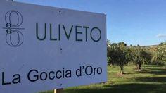 Siciliani Creativi - Come si fa l'olio extravergine di oliva - How is ma...