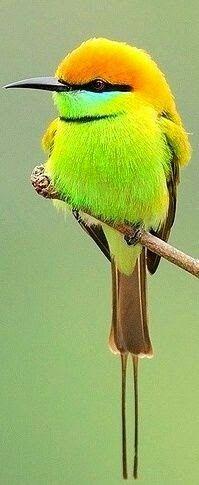 colores preciosos