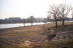 dog park wybieg dla psów