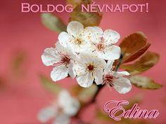 Boldog névnapot, Edina!