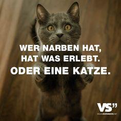 Visual Statements®️ Wer Narben hat, hat was erlebt. Oder eine Katze. Sprüche / Zitate / Quotes / Leben / Freundschaft / Beziehung / Liebe / Familie / tiefgründig / lustig / schön / nachdenken