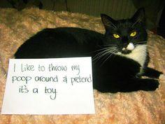 cat-shaming-49__605.jpg (800×600)