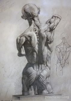 Academic drawing - male muscular system back; a classical way to study anatomy
