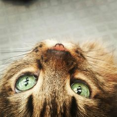 #Cat #Gata #Chat #Eyes