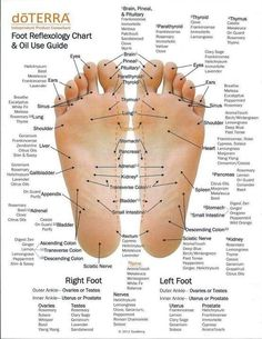 Reflexology chart showing where your nervous system ends on your feet.