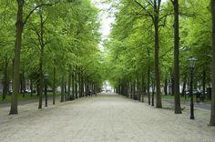 Lange Voorhout - The Hague
