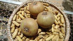Sapoti e amendoim || Foto: Pedro Andrade