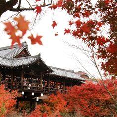 JRのCMのような絵は撮れませんでしたが。 #東福寺 #通天橋 #京都 #紅葉 #kyoto #そうた京都行こう京都