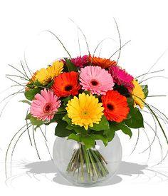 Gerbera daisies = my favourite flowers