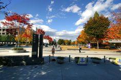 Những trường đại học tốt nhất tại Nhật Bản