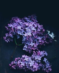 Есть ли тут любители сирени?��. And you love lilacs?����. #flower #flowerstagram #flowersofinstagram #flowerslovers #flowerstyles_gf #instagramanet #instaflower #instaflowers #instatag #flowerstalking #floweroftheday #flowerporn #flowermagic #flowerpower #flowercrown #petal #petals #nature #beautiful #love #pretty #plants #blossom #spring #summer #photooftheday #beauty http://gelinshop.com/ipost/1517374629356942556/?code=BUOzC-eArTc