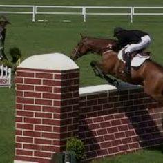 Beautiful horse jumping
