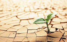 Vortex Psicoterapias: CORAGEM!! A semente não pode saber o que lhe vai a...
