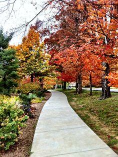 Wilson Park, Fayetteville AR. I love Fayetteville.