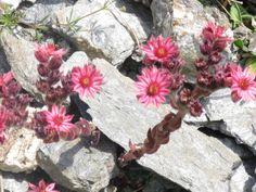 My pics - mijn foto's-flowers Frace