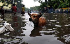 Les rues de Calcutta sont inondées par la mousson, le 30 juin.