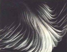 Edward Weston, Cabbage leaf (1931)