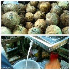 日曜朝一 #sunday #morning #market #coconuts #milk #fresh #food #philippines #フィリピン #ココナッツ #ミルク