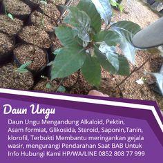 Tawk to nama obat ambeien Gardening, Plants, Faces, Garten, Lawn And Garden, Planters, Plant, Square Foot Gardening