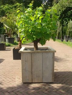 Steigerhouten plantenbak op wielen, afmetingen 60x60x50cm