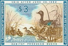 New print available on lanjee-chee.artistwebsites.com! - 'Migratory bird duck hunting stamp 1961-1962 Mallards' by Lanjee Chee - http://lanjee-chee.artistwebsites.com/featured/migratory-bird-duck-hunting-stamp-1961-1962-mallards-lanjee-chee.html via @fineartamerica