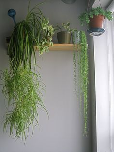 wraparound high shelf with plants against grey wall