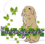 Hur man utfodrar sin kanin är kanske det allra viktigaste för att den ska leva ett långt och friskt liv. Kaniner har väldigt känslig mage.  HöBasfödan i kaninens kost är Timotejhö eller Gräshö…