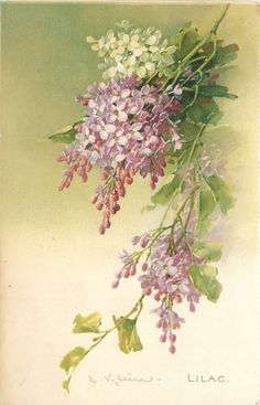 Vintage Lilac Postcard, Artwork by Catherine Klein