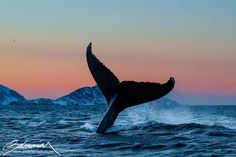 Whale of a Tail!