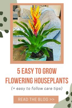 Did you know that some indoor house plants produce flowers? These 5 easy indoor flowering houseplants come in a variety of colors, the most common producing purple, white, pink and red flowers. We've included some low light plants and small plants perfect for apartment living. Find out where to buy one today.