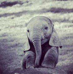 #elephant #wild #animals