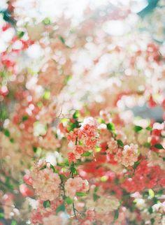 paper flowers on Flickr.  (via dollygold)  Source: gabyj