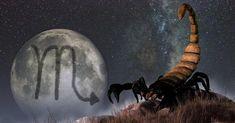 Scorpion, Art Scorpio, Horoscope, Painting, Thoughts, Decor, Zodiac, Spirit, Astrology Signs