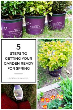 5 Steps to Getting Your Garden Ready for Spring: $100 Sweepstakes