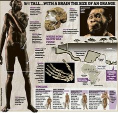 Is this the first human? Extraordinary find in a South African cave suggests man may be up to 2.8million years old | Daily Mail Online