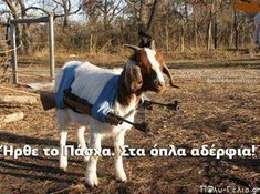 Check out: Animal Memes - Goat serious. One of our funny daily memes selection. We add new funny memes everyday! Bookmark us today and enjoy some slapstick entertainment! Animal Memes, Funny Animals, Farm Animals, Animal Humor, Funniest Animals, Animal Antics, Animals Images, Adorable Animals, Funny Dogs