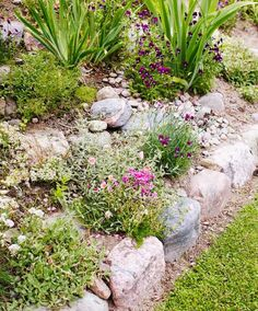 Stepping Stones, Outdoor Decor, Plants, Stair Risers, Plant, Planets