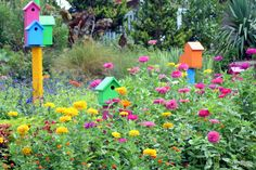 Zinnia garden & bird houses, Virginia Beach Botanical Garden