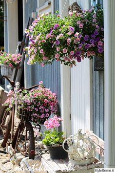 puutarha,piha,pihan istutukset,kukat,kukkia,kesäkukat,roosat kukat