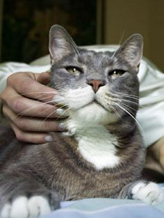 Feline Health Facts