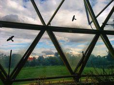 @dusseldorfguide Fun is outside  #duesseldorf #dusseldorf #düsseldorf #nature #beautiful #pretty #plants #garden #birds #geese #fly #sky #greenhouse #dome #glassdome #beauty #free #freedom #mothernature