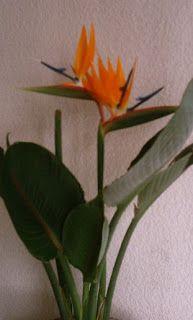 Plantas interior Jardineria: FLOR AVE DEL PARAÍSO
