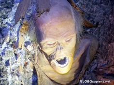 """Picture 3 of 3: a """"perfectly"""" preserved person who was trapped in a salt mine accident, only to be found years after his death. Now he's on display in the mines..?!?! Salzburg, Austria."""