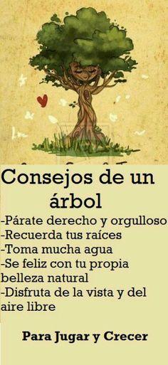 Arboles....