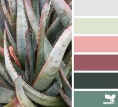 Succulent Hues - https://www.design-seeds.com/in-nature/succulents/succulent-hues-20
