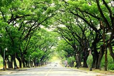 UP Diliman, Quezon City, Philippines Quezon City, Slice Of Life, Alma Mater, Where The Heart Is, Travel Goals, How To Relieve Stress, Canopy, Philippines, Sidewalk
