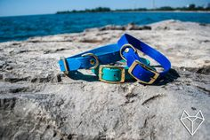 Waterproof Dog Collar in Bright Electric Blue by goodwolfdesignco