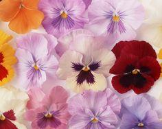 Flower Art - Art Flowers Photos - Flower Photography 1280*1024   Wallpaper 1
